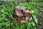 Искусственный камень D60/40 Люкс